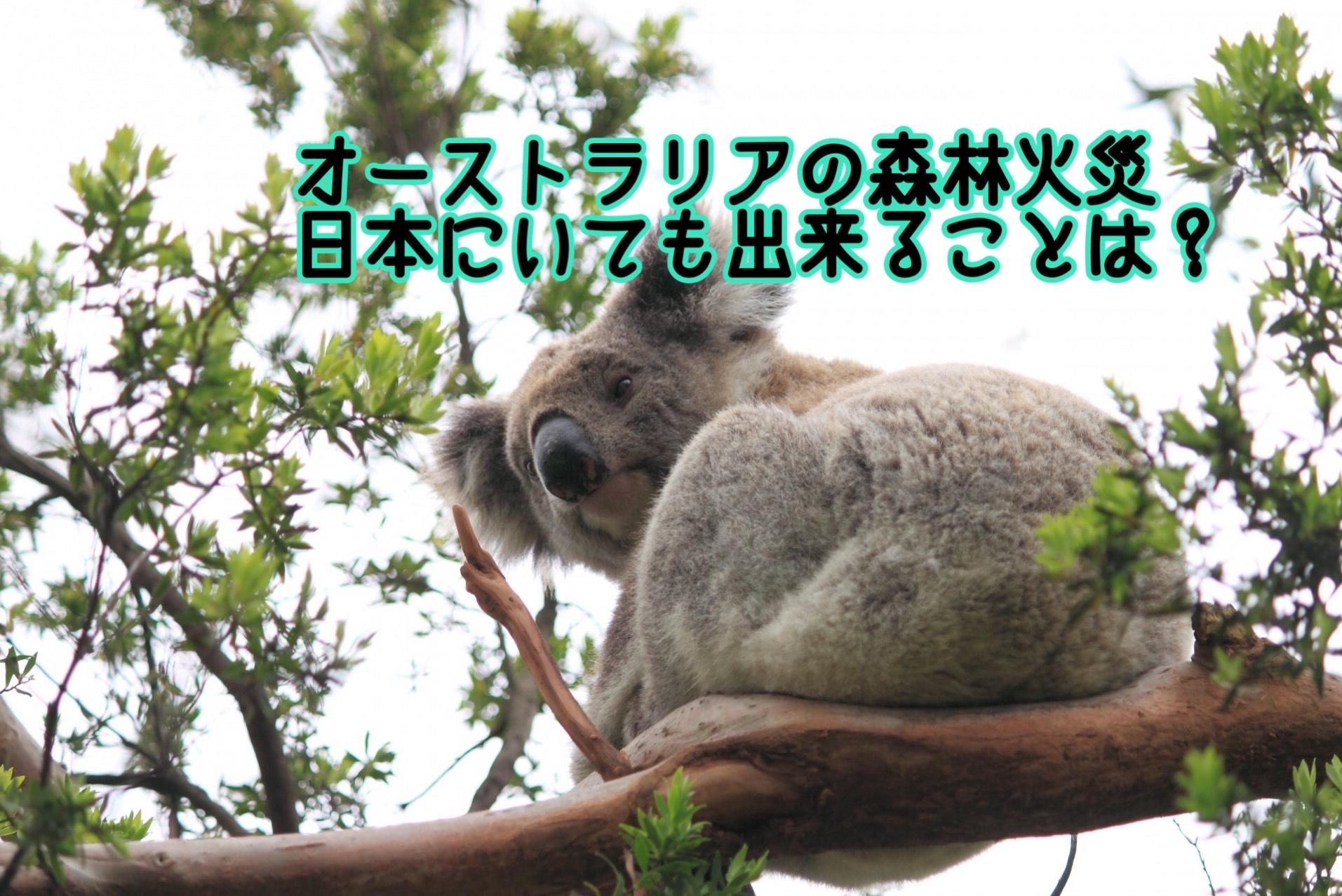 募金 マーチ コアラ の