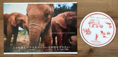 アフリカ象の涙