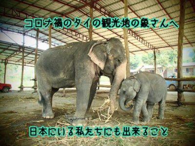 タイの象へ寄付メイン画像